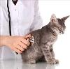 Ветеринарные клиники в Кемерово